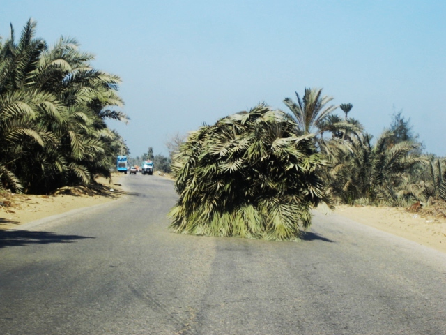 Saqqara, Egypt - Grass Truck on a Road